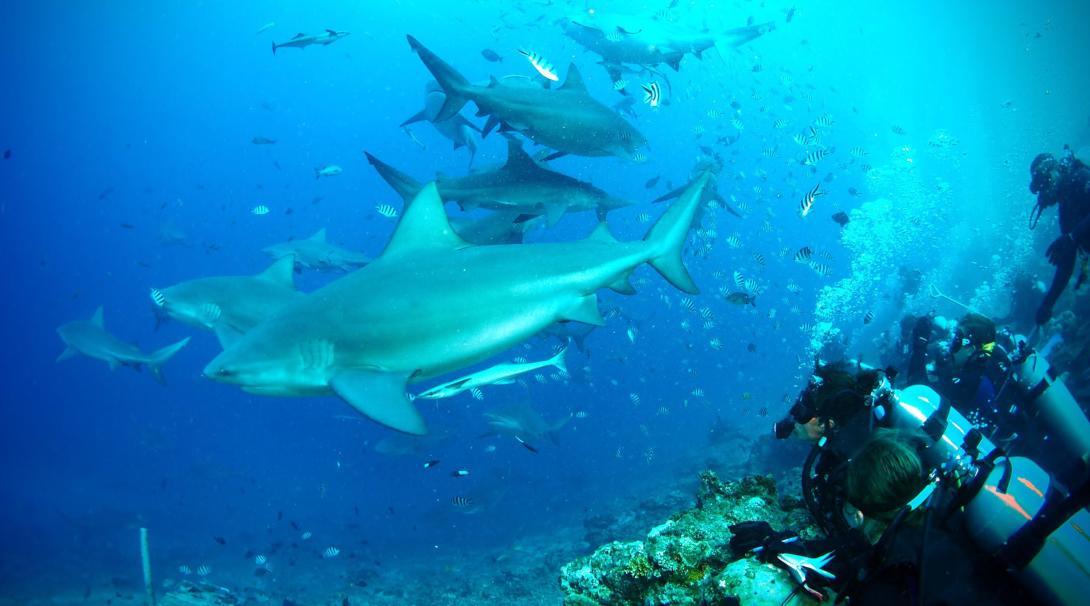 Voluntarios del programa de conservación de tiburones y personal local realizando un monitoreo en una costa de Fiyi.
